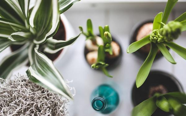 Website Plante Exotice